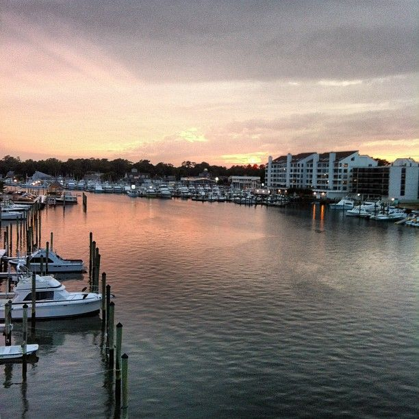 14 best dolphin watching images on pinterest virginia for Rudee inlet fishing