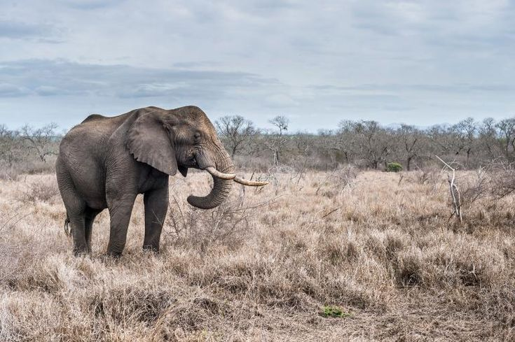 POLL: Should US zoos be allowed to import wild elephants from Africa? by Supertrooper http://focusingonwildlife.com/news/poll-should-us-zoos-be-allowed-to-import-wild-elephants-from-africa/