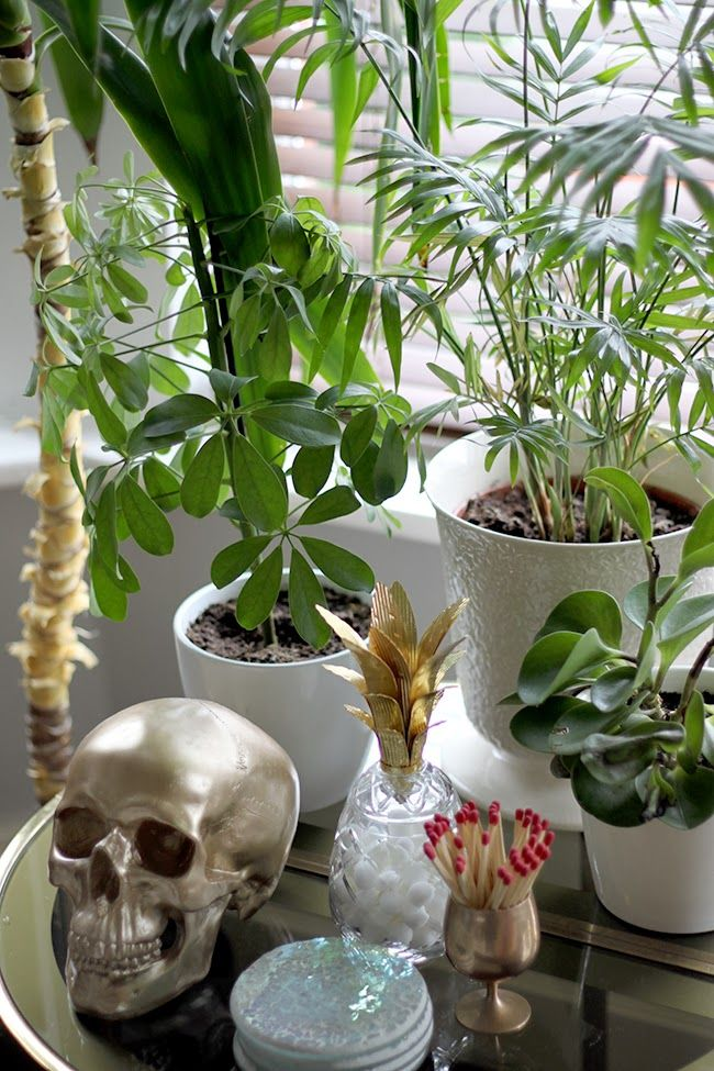 Plant vignette with gold skull and glass and brass pineapple