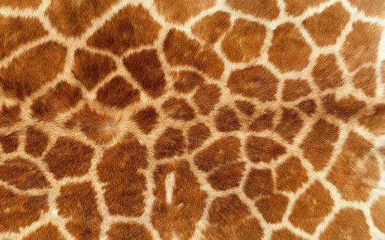 Textura piel de Jirafa - Fondos de Pantalla. Imágenes y Fotos ...