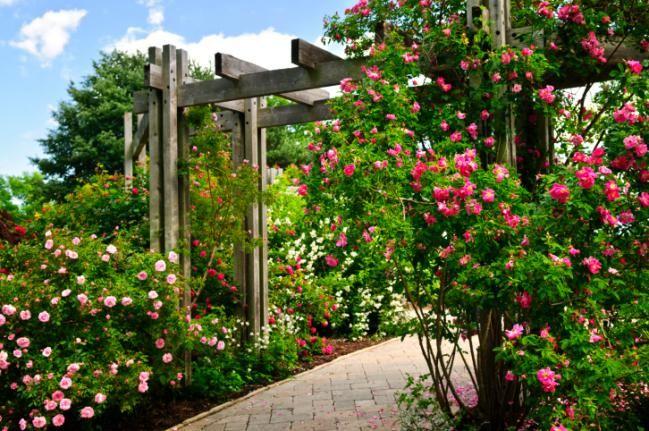 5 enredaderas de rápido crecimiento para adornar tu jardín - IMujer