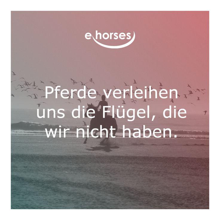 Pin von ehorses.de auf ehorses Pferdezitate | Pferde ...