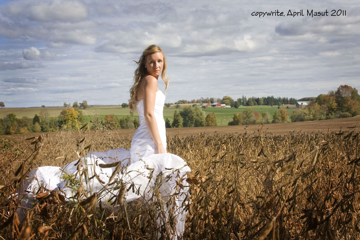 Cornfields by Silver Wing Photography