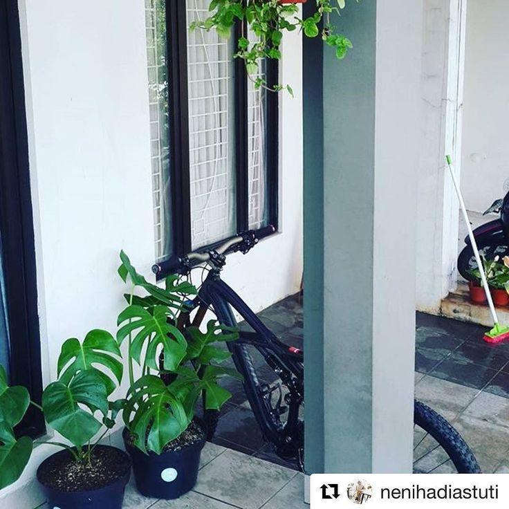 Bikin seger mata  makasih mbak @nenihadiastuti  . . #Repost @nenihadiastuti  Morniing universe  #plant #monstera #tanamanbikinhepi #happymoms #gogreen #rumahimpian #rumahminimalis #rumahnindra #like4like #likeforlike #homesweethome