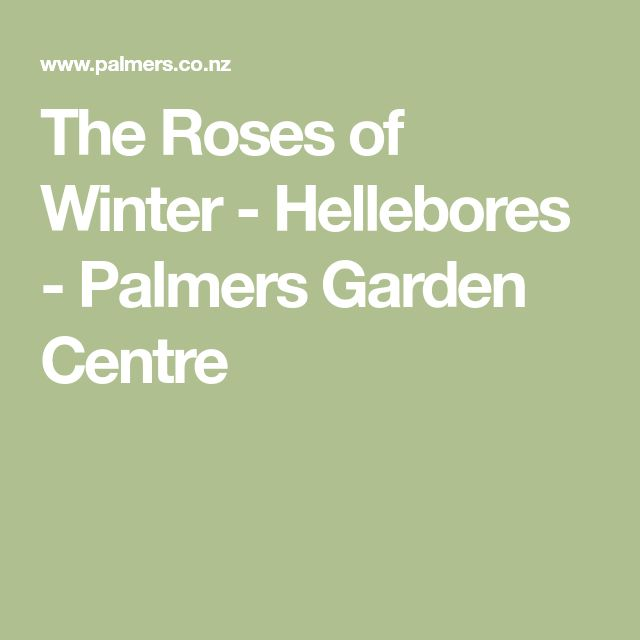 The Roses of Winter - Hellebores - Palmers Garden Centre