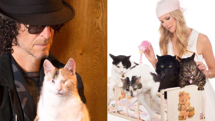Howard Stern, cat whisperer? Shock jock, wife foster 50 kitties