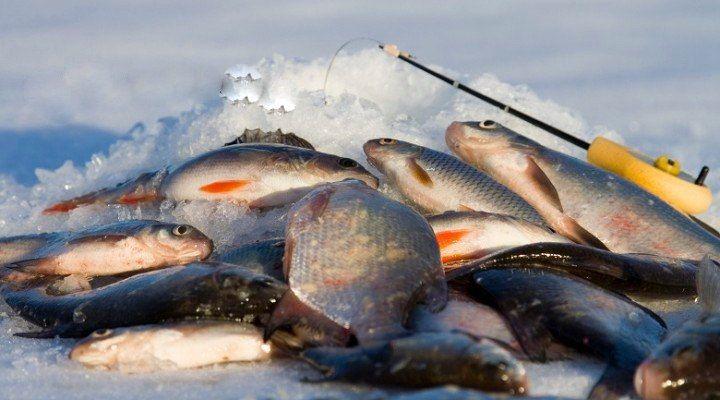 Плюсы и минусы рыбалок в мороз    Очень жаль, но прошло те времена, когда можно было ездить на рыбалку, когда захочется, куда захочется и на сколько захочется. В юности не было проблем, семьи, работы, обязанностей.    Став взрослее, заведя семью и детей, работу, но лишившись одного – свободного времени, на рыбалку приходится выезжать, когда позволяют. Это только кажется, что захотел и поехал, но существуют много НО, которые перечислять не стоит. У каждого НО – свои. А когда все уладится и…