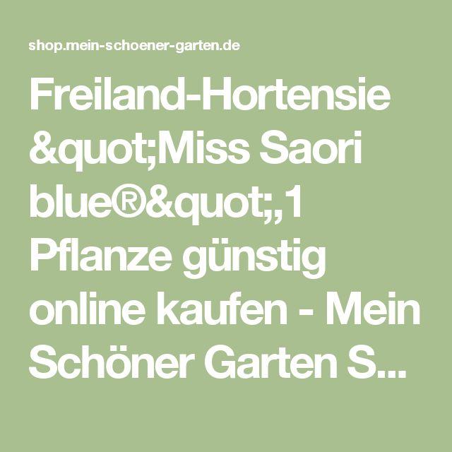 Spectacular Freiland Hortensie Miss Saori blue Pflanze g nstig online kaufen
