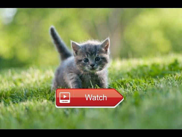 🐬 Top Funny Kitten and Cute Kittens Videos Compilation BEST OF 🐧 Kittens are very funny and cute animals Funny kitten videos for kids and…