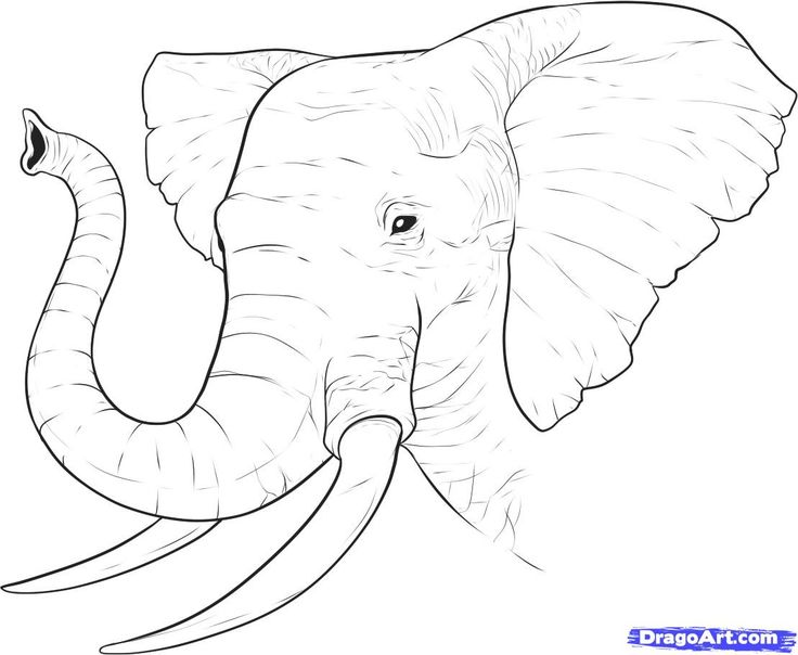 how to draw a simple elephant head