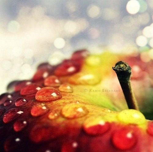 Winter Macro Photography Ideas | Found on creativephotographymagazine.com
