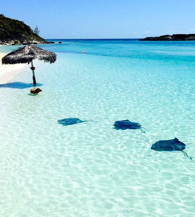 Bahamas Beach: 137 Best It's Just Better Here {The Bahamas} Images On