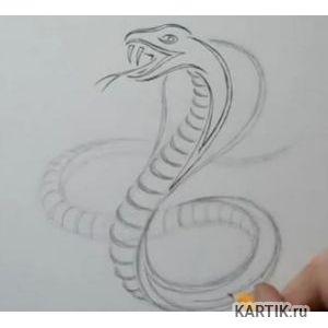 Как нарисовать татуировка змеи карандашом на бумаге 68