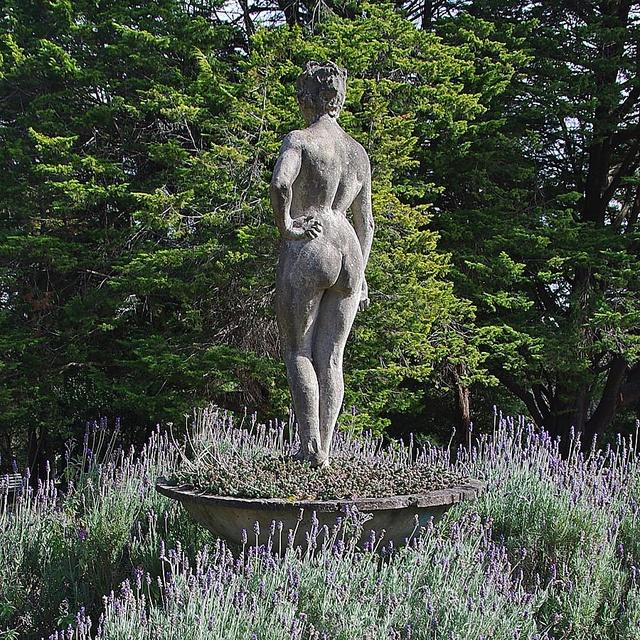 Lavender Lady by Merryjack, via Flickr