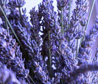 The Herb Gardener: Harvesting Herbs