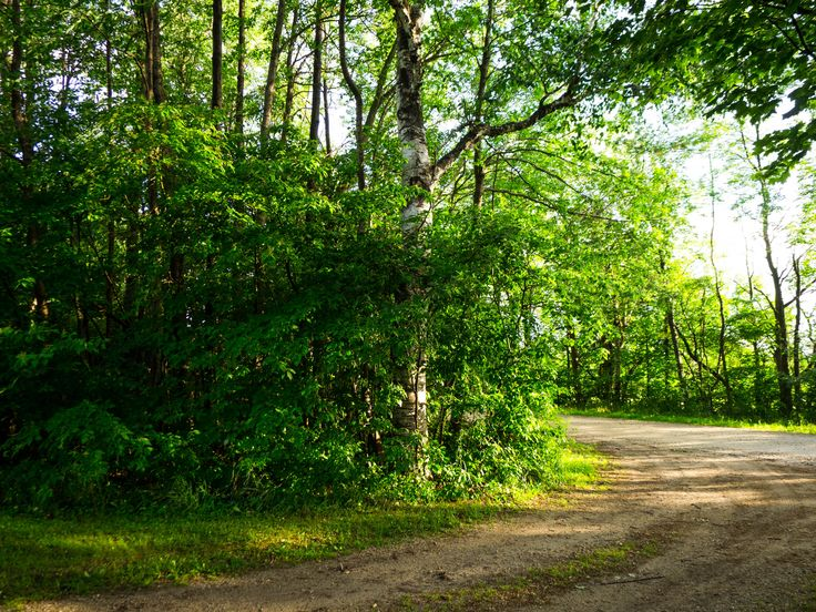 Sunset on a country road. #country #dirtroad #sunset #green #Arthur #Ontario