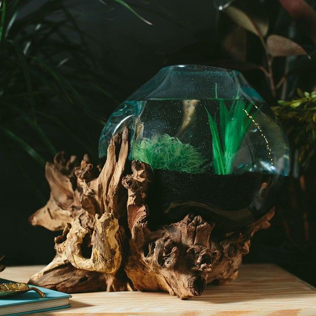 Earthbound   This is such a neat way to add curiosity to your home! These driftwood vases can be used like a #terrarium by adding moss, rocks, #succulents and other low maintenance plants. Or add a new friend to your environment by using it as a fish bowl!