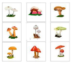 spunti - carte autunnali zucche, frutti, funghi...