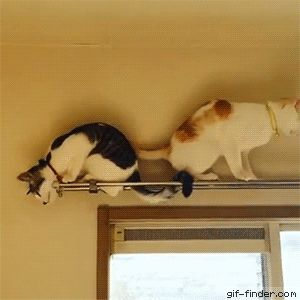Cat Backs Up Over Other Cat And Falls   Gif Finder – Find and Share funny animated gifs