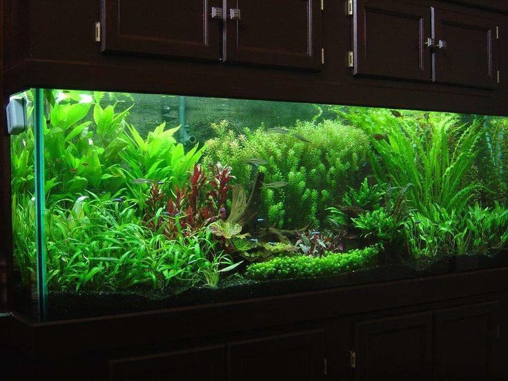 62 best aquascaping fish tank images on pinterest fish for Co2 fish tank