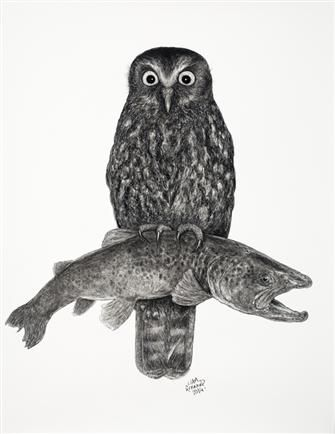 Morepork with Trout