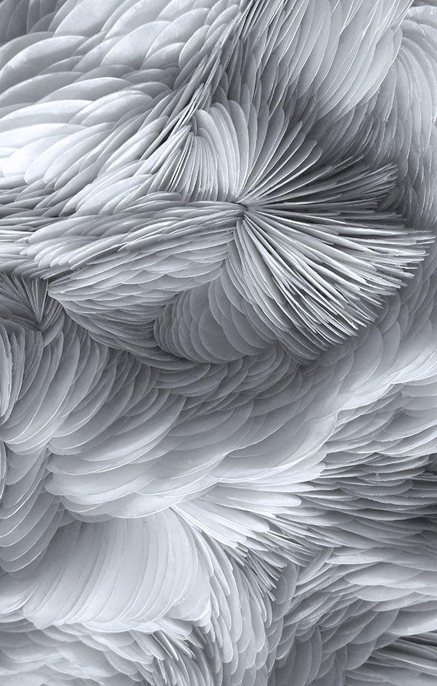 Rowan Mersh | Placuna Phoenix (detail), 2014