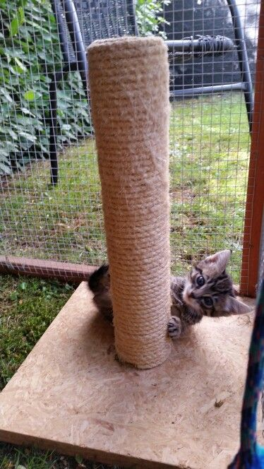 Sherry river kitten