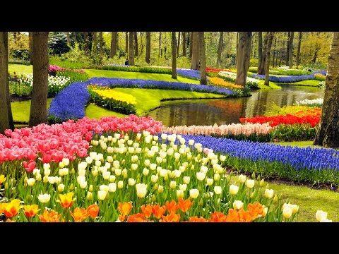 Stunning Skip the Line Keukenhof Gardens Tour and Tulip Farm Visit from Amsterdam Amsterdam