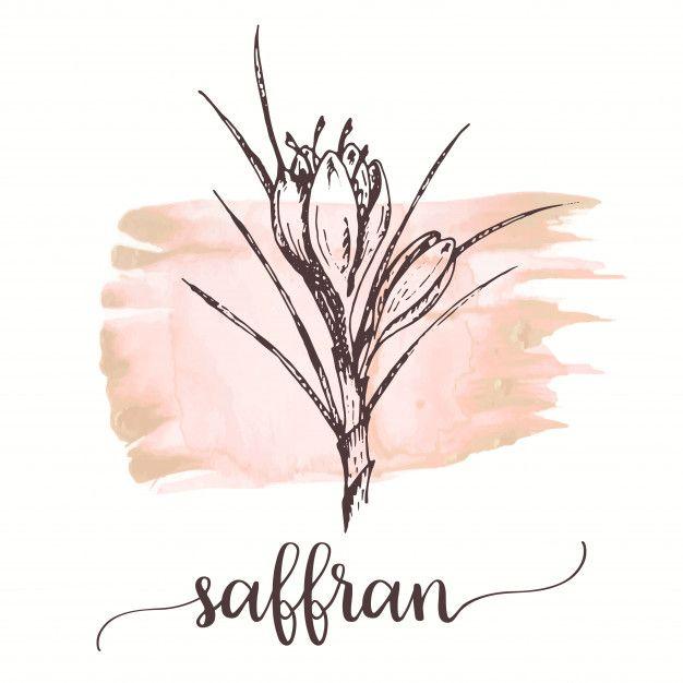 Saffron Flower Sketch Hand Drawn Ink Illustration Saffron Flower Flower Drawing Flower Sketches