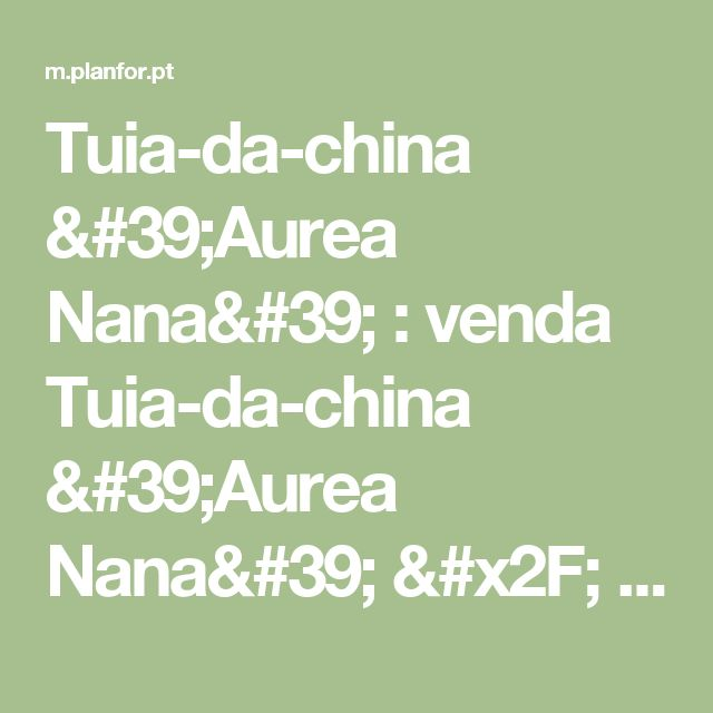 Tuia-da-china 'Aurea Nana' : venda Tuia-da-china 'Aurea Nana' / Thuja orientalis Aurea Nana