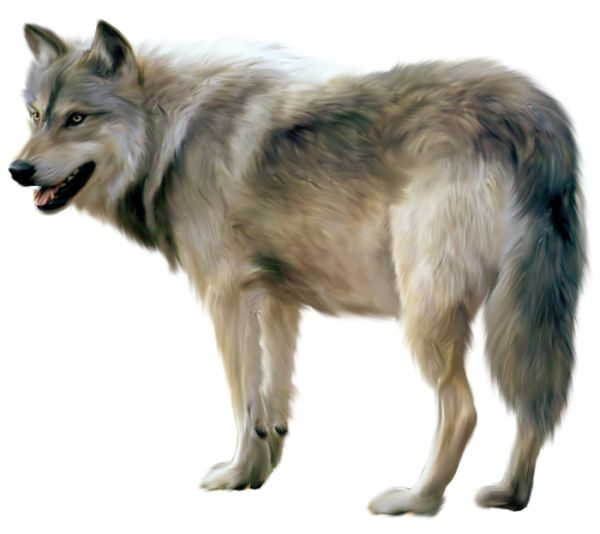 Painted Wolf Clipart