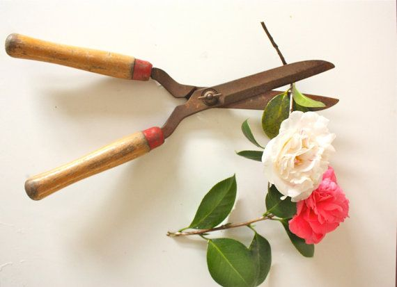 grow where you are planted by rita summers on Etsy featuring The Spoon Flower