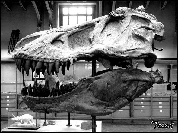 musée histoire naturelle paris - Recherche Google