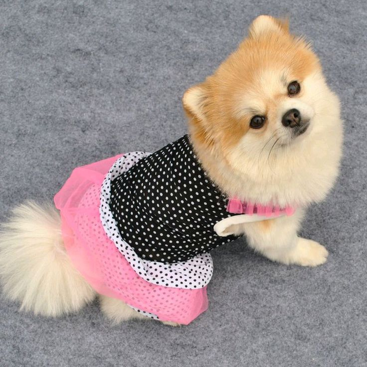 Your best friend on four legs can be just as fashionable as you this summer. From t-shirts, to skirts, to vests and more, they'll make all the other dogs in the park jealous of their sweet style. Visit eBay and find the cutest clothes for your number one pup.