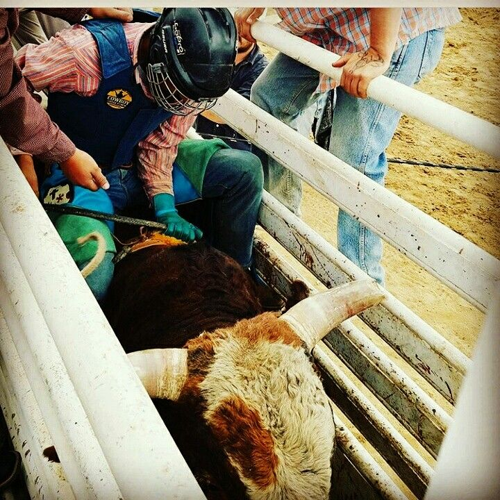 Bull Riding Rodeo Time Follow This Cowboy! @tinoco_jerry16 https://www.instagram.com/tinoco_jerry16/ Team Cowboy Coffee Chew #rodeo #bullriding #cowboys