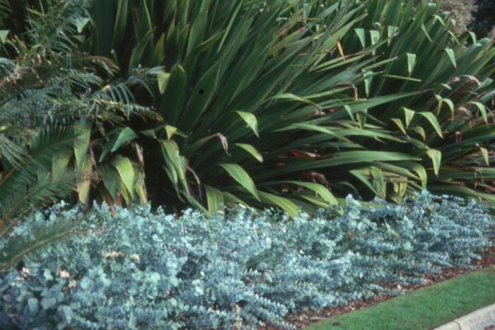 17 Best Images About Gardening Native Border On 400 x 300