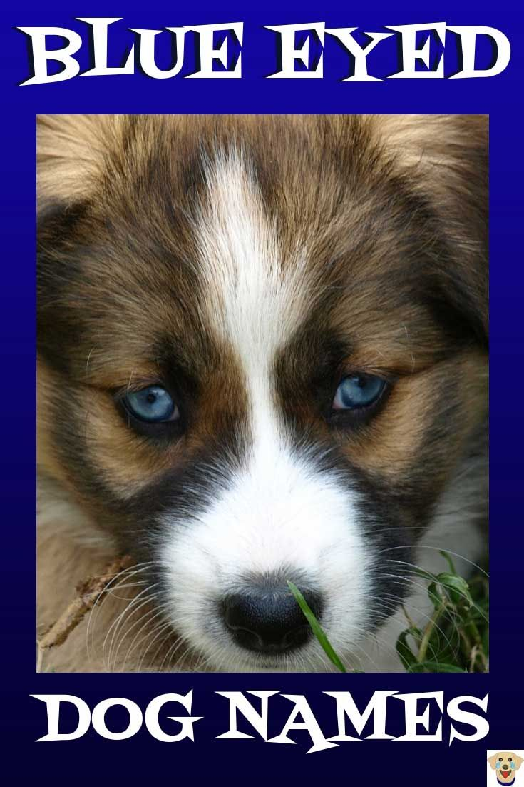 Over 90 Of The Most Hypnotic Blue Eyed Dog Names Blue Eyed Dog Names Dog Names Blue Eyed Dog