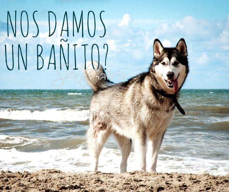 Hotel Bosque Mar***, O Grove. Se admiten #mascotas ¡ #GRATIS !