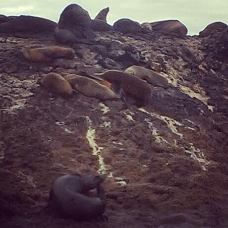 Seals off Stanley
