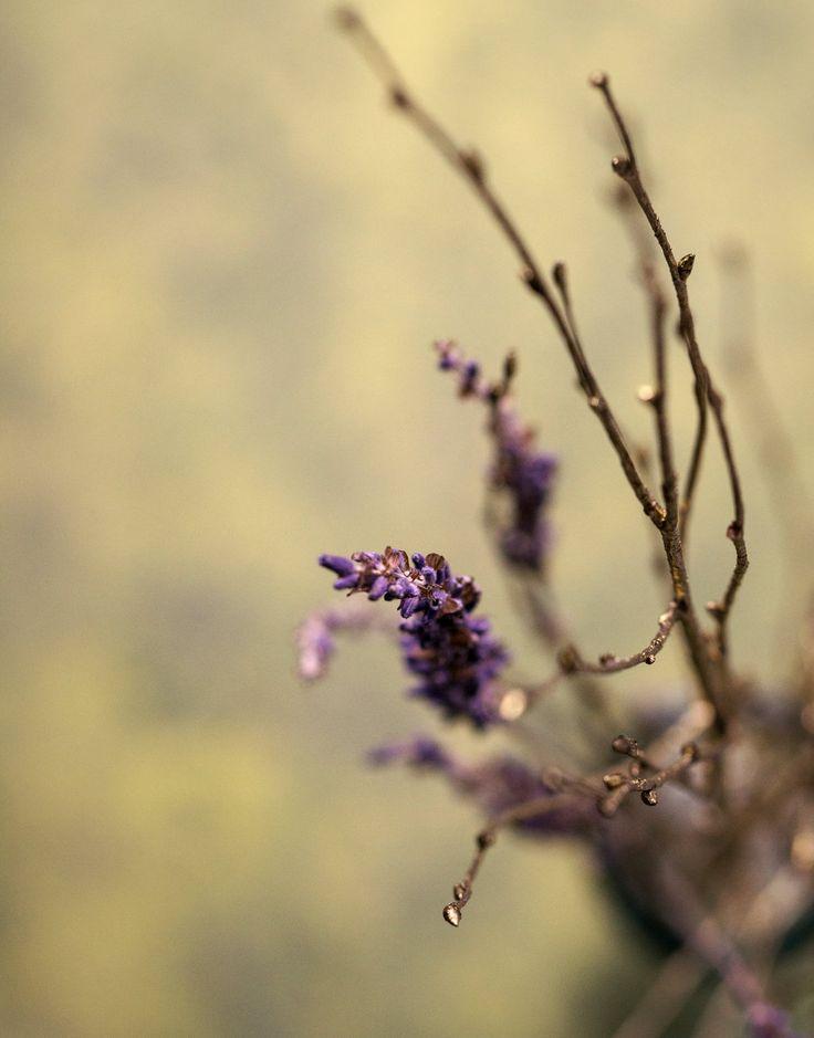 Lavender and Gold by VinaApsara.deviantart.com on @DeviantArt