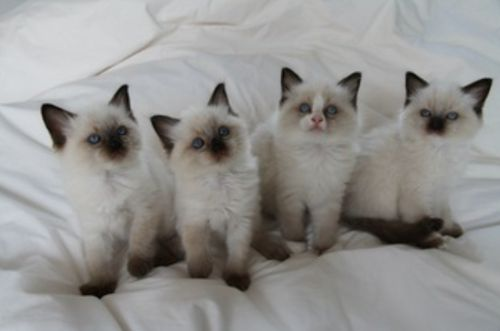 Kittens *squee*