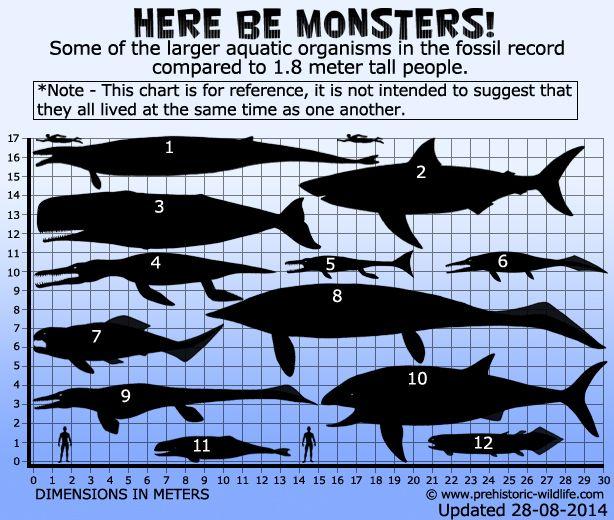 Largest Marine Monsters Prehistoric Creatures Megalodon Prehistoric Wildlife