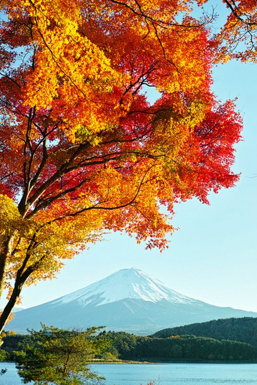 Mt. Fuji and autumn leaves #3 (by nipomen2)