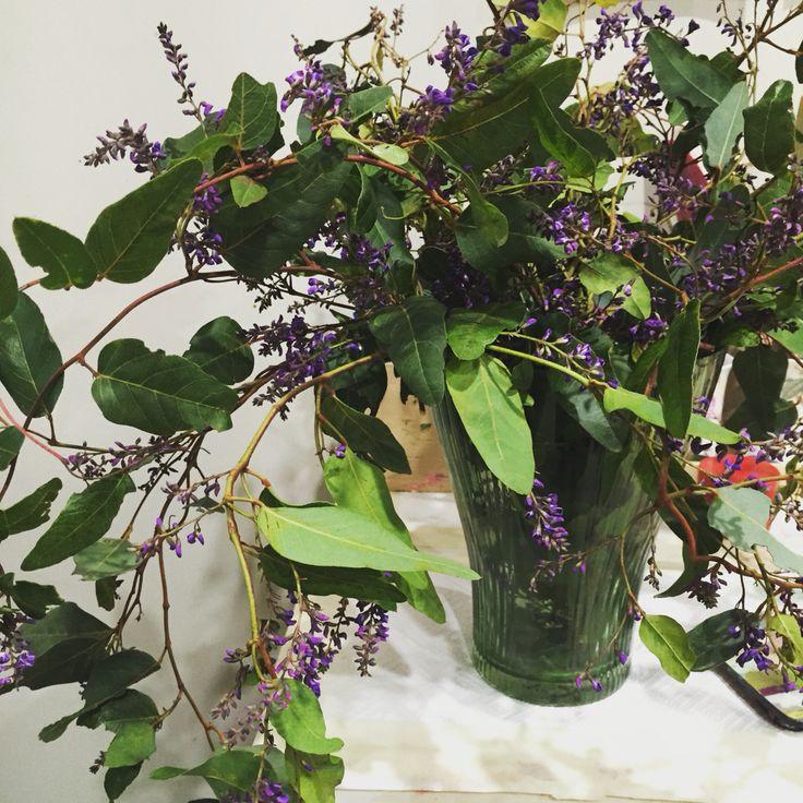 Native lilac