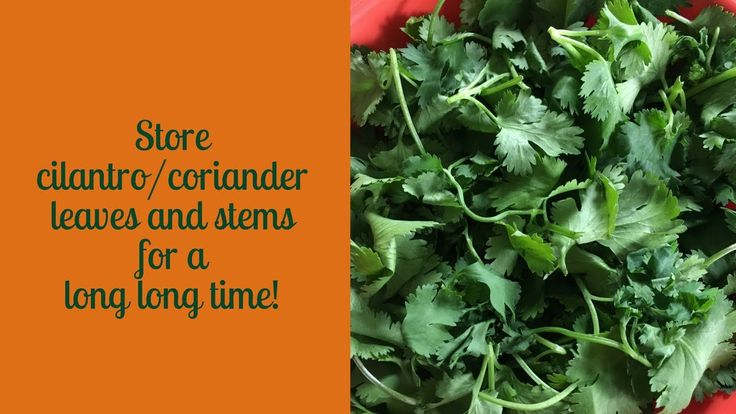 Best way to store cilantro/coriander leaves and stems for a long long ti...