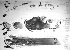 「杉浦康平」の画像検索結果
