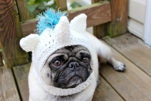 @Erin Huie Mizell you should get a dog just so you can make this for it! Magical Unicorn Dog Hat \  Made to Order by Sweethoots on Etsy