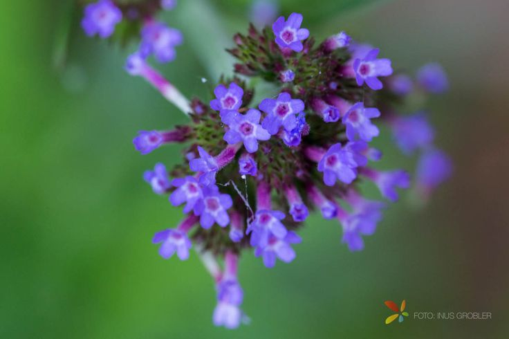 Taking great closeup photos of flowers requires a good macro lens. It is ...