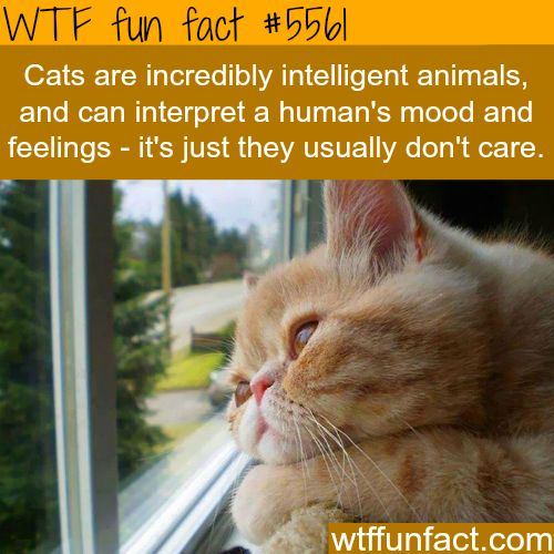 Cats usually don't care about how you feel, ...But will come to aid you in times of danger!  ~WTF fun facts