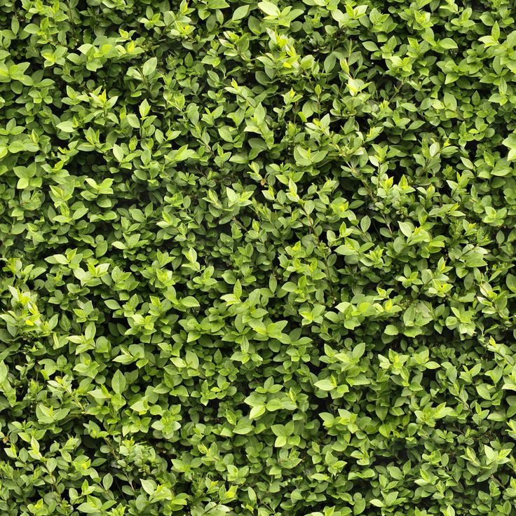 Seamless Hedge Texture by hhh316 on DeviantArt